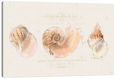 Shell Collector I Canvas Art Print