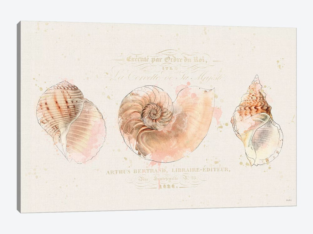 Shell Collector I by Katie Pertiet 1-piece Canvas Wall Art