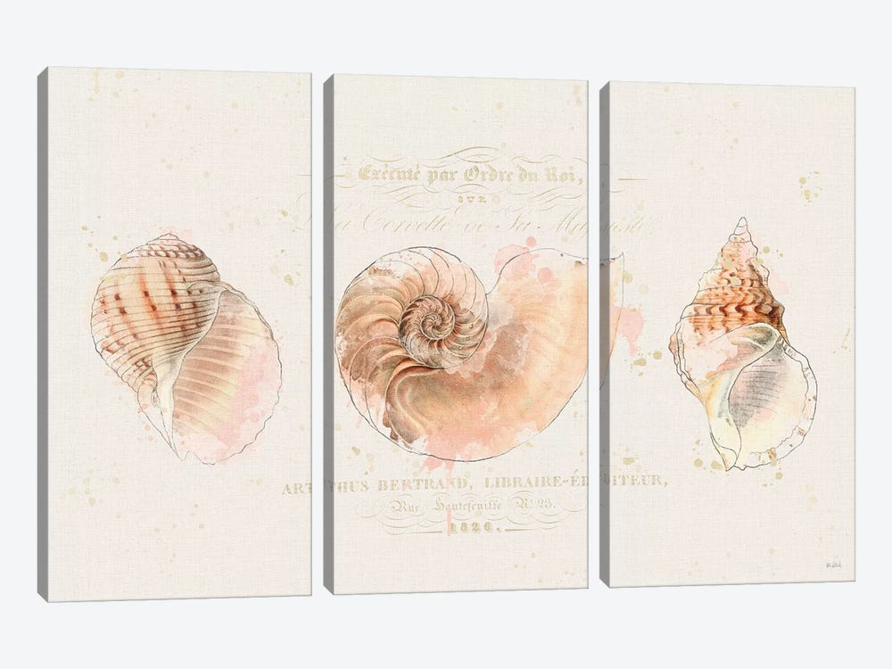 Shell Collector I by Katie Pertiet 3-piece Canvas Art