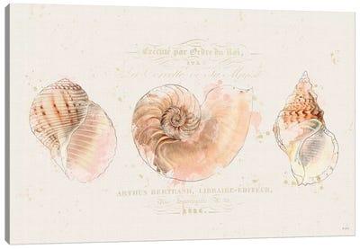 Shell Collector I Canvas Art Print