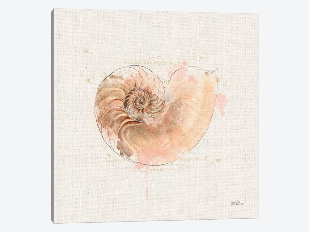 Shell Collector II by Katie Pertiet 1-piece Canvas Art