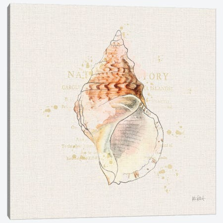 Shell Collector III Canvas Print #WAC6621} by Katie Pertiet Canvas Artwork