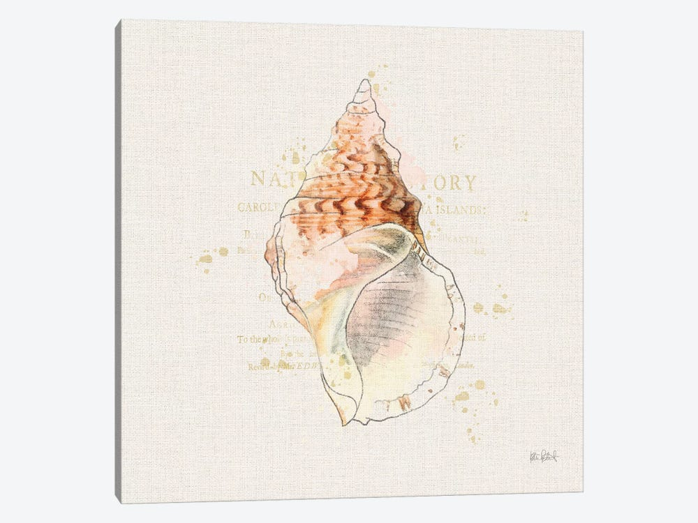 Shell Collector III by Katie Pertiet 1-piece Canvas Print