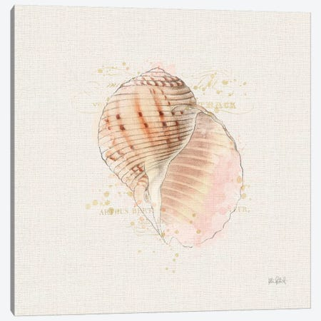 Shell Collector V Canvas Print #WAC6623} by Katie Pertiet Canvas Wall Art