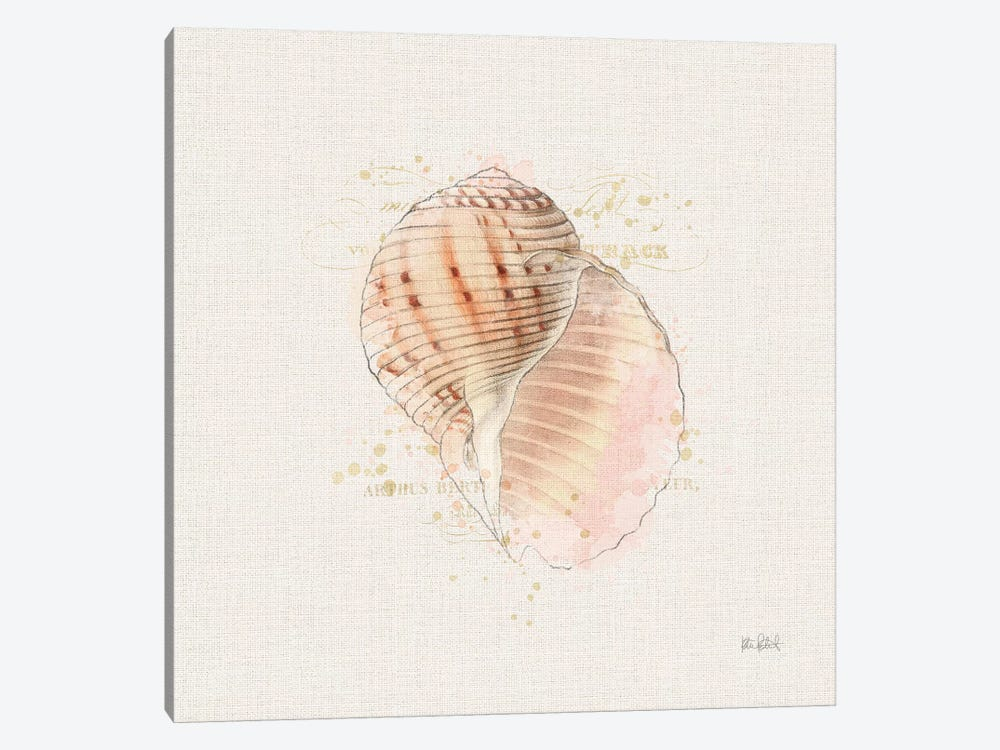 Shell Collector V by Katie Pertiet 1-piece Art Print