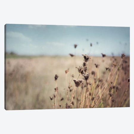 Falling Queen Anne's Lace I Canvas Print #WAC6636} by Elizabeth Urquhart Canvas Art