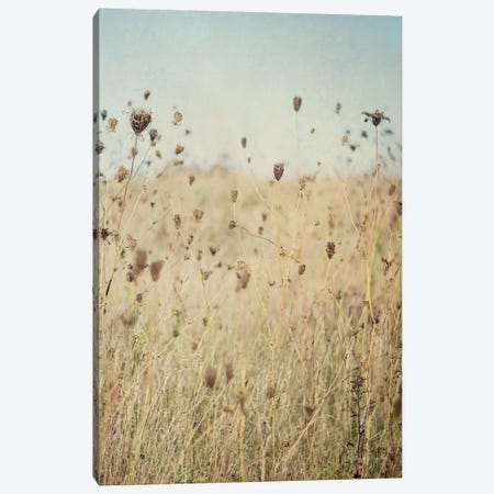 Falling Queen Anne's Lace II Canvas Print #WAC6637} by Elizabeth Urquhart Canvas Artwork
