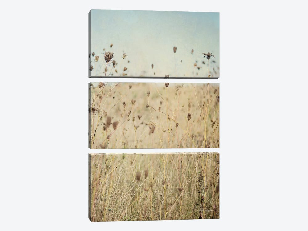 Falling Queen Anne's Lace II by Elizabeth Urquhart 3-piece Canvas Art
