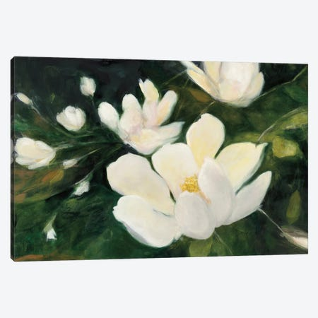 Magnolia Blooms In Zoom Canvas Print #WAC6788} by Julia Purinton Art Print