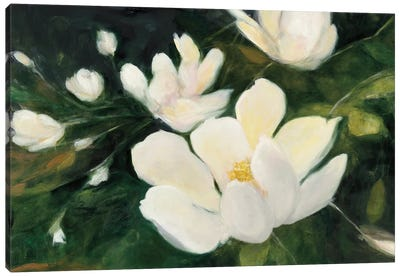 Magnolia Blooms In Zoom Canvas Art Print