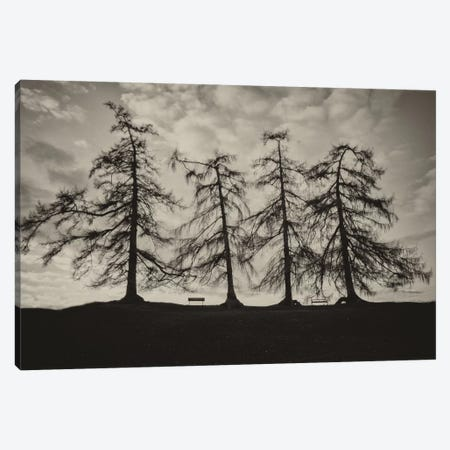 Park Trees Canvas Print #WAC6875} by Keri Bevan Canvas Wall Art
