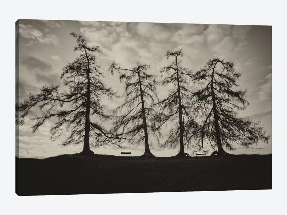 Park Trees by Keri Bevan 1-piece Canvas Print