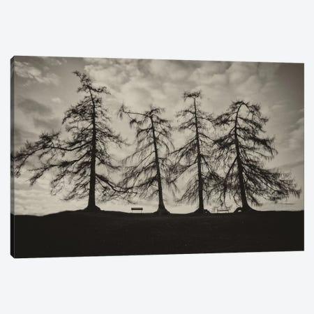 Park Trees Canvas Print #WAC6875} by Keri Bevan Canvas Wall Art