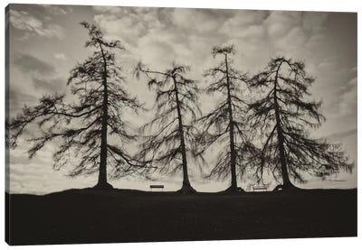 Park Trees Canvas Art Print
