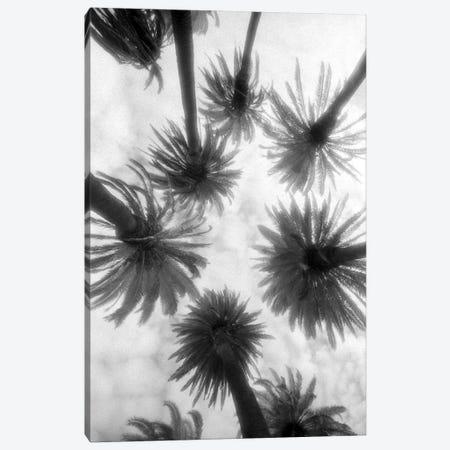 Amongst The Palms Canvas Print #WAC6933} by Jim Dratfield Canvas Art