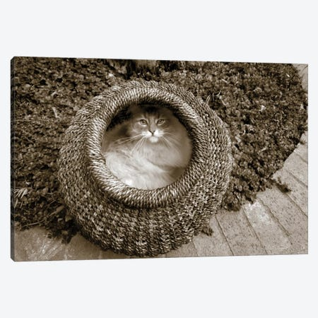 Cat In A Basket Canvas Print #WAC6934} by Jim Dratfield Art Print