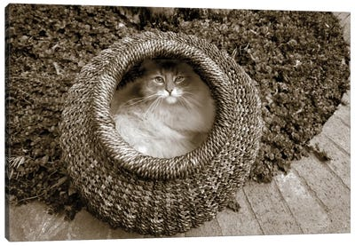 Cat In A Basket Canvas Art Print