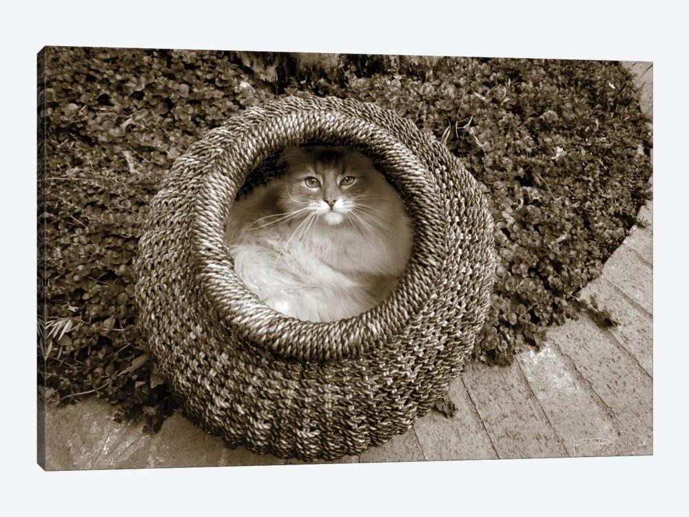 Cat In A Basket by Jim Dratfield 1-piece Canvas Print