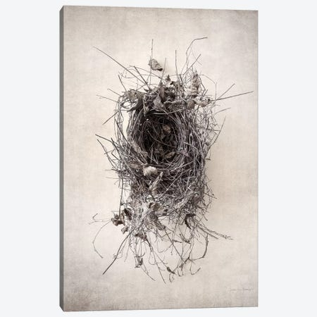 Nest II Canvas Print #WAC7032} by Debra Van Swearingen Canvas Art