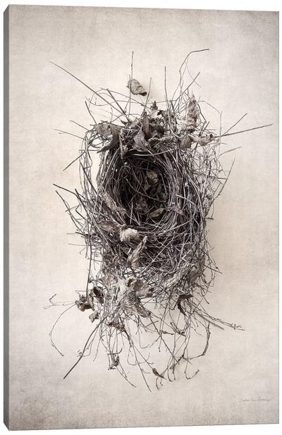 Nest II Canvas Art Print