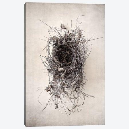 Nest II Canvas Print #WAC7032} by Debra Van Swearingen Canvas Art