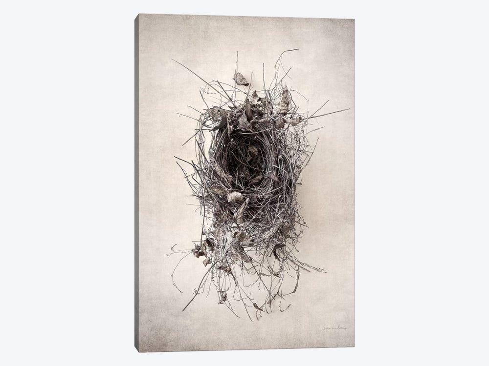 Nest II by Debra Van Swearingen 1-piece Canvas Print