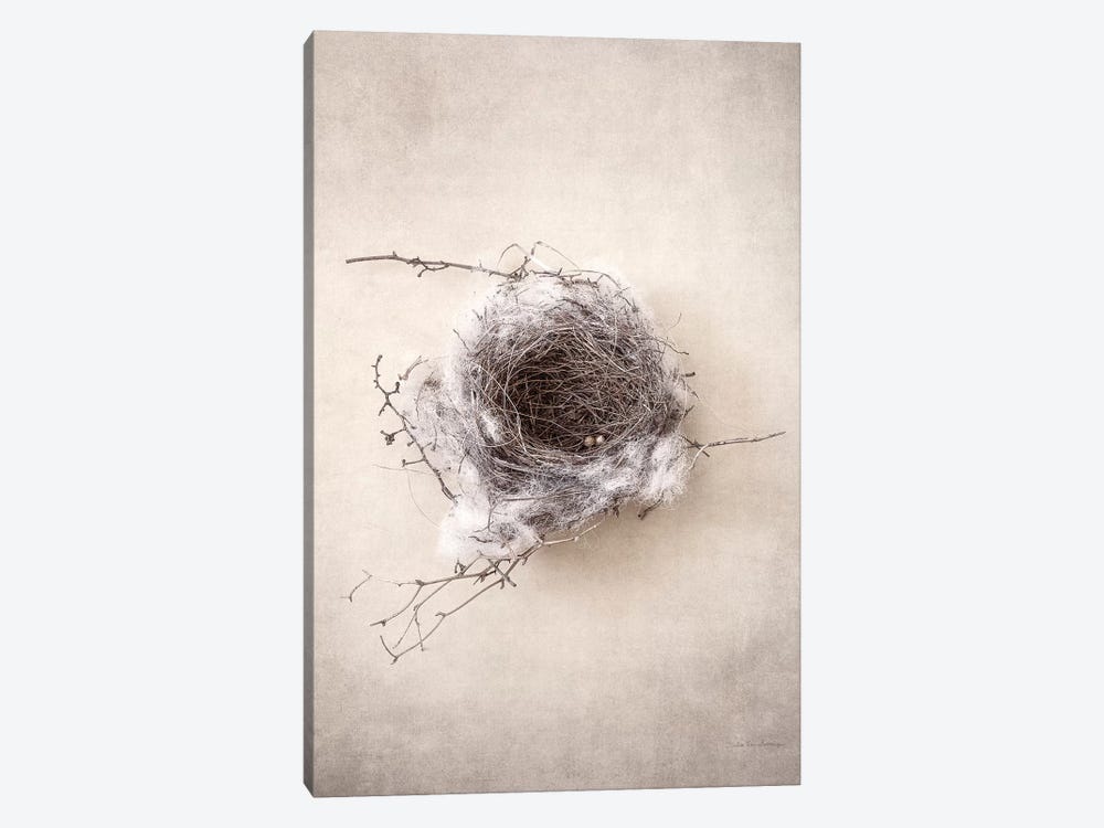 Nest III by Debra Van Swearingen 1-piece Canvas Wall Art