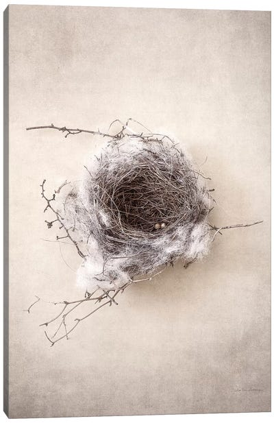 Nest III Canvas Art Print