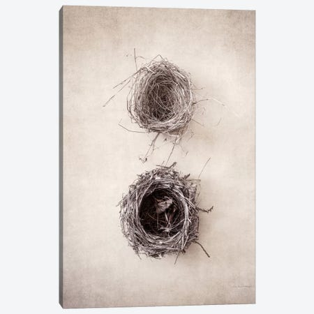 Nest IV Canvas Print #WAC7034} by Debra Van Swearingen Canvas Art Print