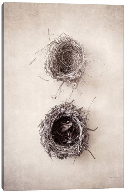 Nest IV Canvas Art Print