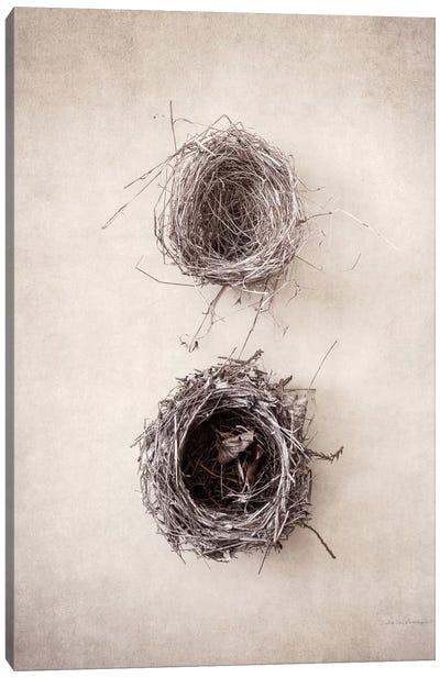 Nest IV Canvas Art Print