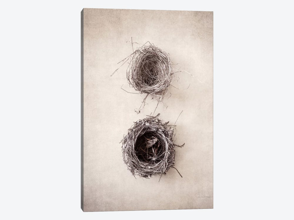 Nest IV by Debra Van Swearingen 1-piece Canvas Print