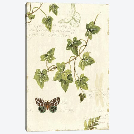 Ivies and Ferns II Canvas Print #WAC705} by Lisa Audit Canvas Art