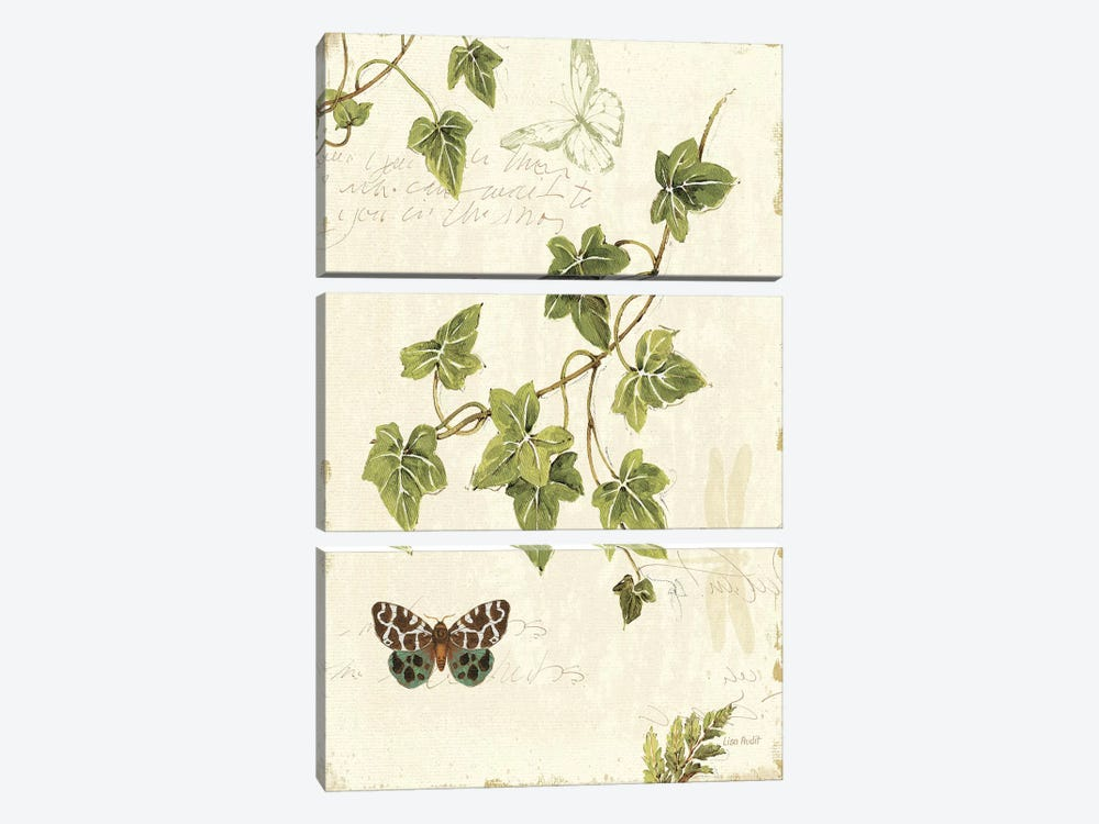 Ivies and Ferns II by Lisa Audit 3-piece Canvas Artwork