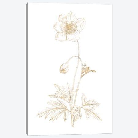 Gilded Botanical II Canvas Print #WAC7065} by Wild Apple Portfolio Canvas Artwork