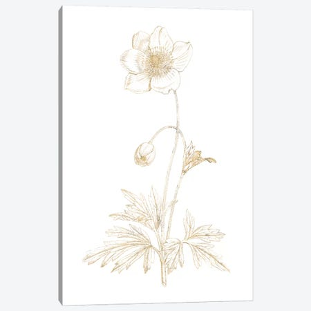 Gilded Botanical II Canvas Print #WAC7065} by Wild Apple Portfolio Canvas Artwork