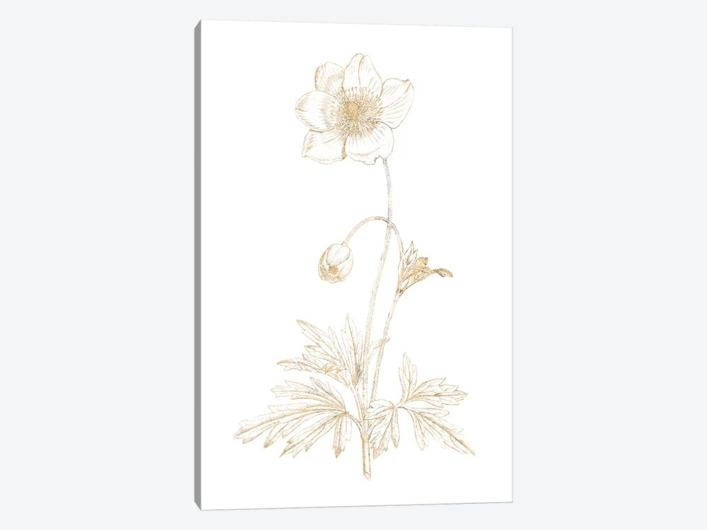 Gilded Botanical II by Wild Apple Portfolio 1-piece Art Print
