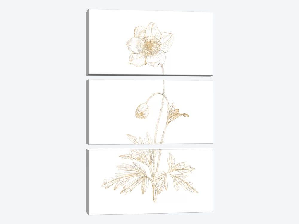 Gilded Botanical II by Wild Apple Portfolio 3-piece Canvas Art Print