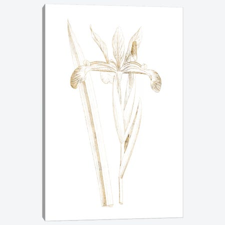 Gilded Botanical III Canvas Print #WAC7066} by Wild Apple Portfolio Canvas Art
