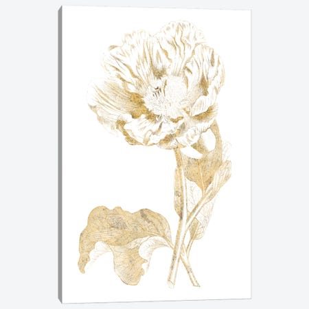 Gilded Botanical VII Canvas Print #WAC7068} by Wild Apple Portfolio Canvas Art Print