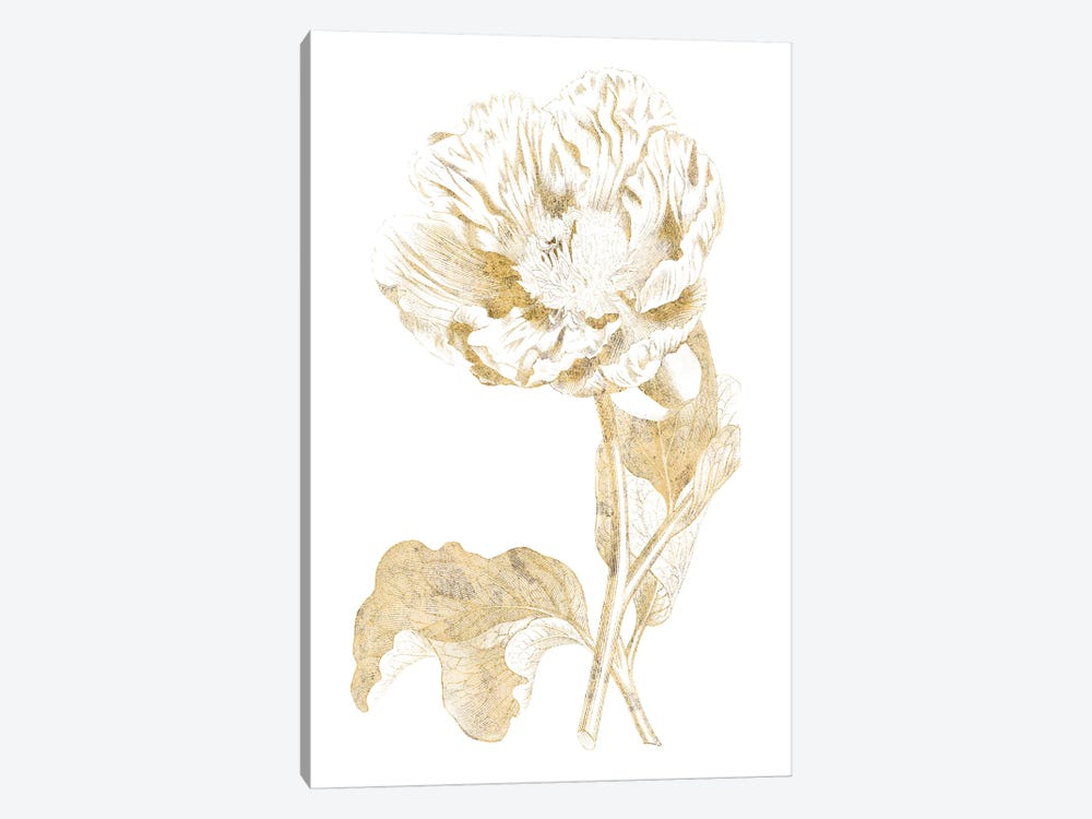 Gilded Botanical VII by Wild Apple Portfolio 1-piece Canvas Artwork