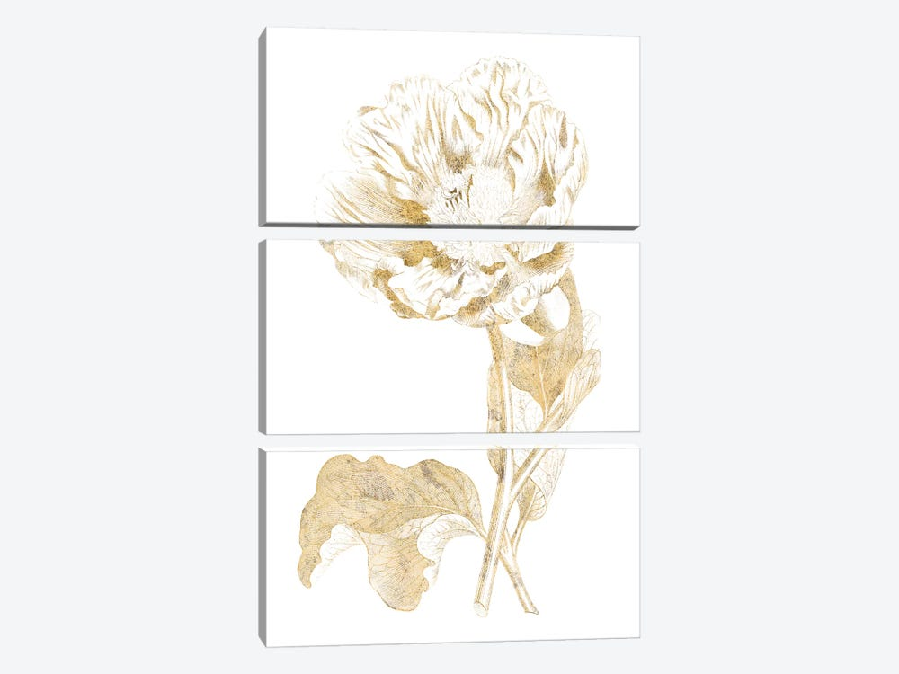 Gilded Botanical VII by Wild Apple Portfolio 3-piece Canvas Artwork