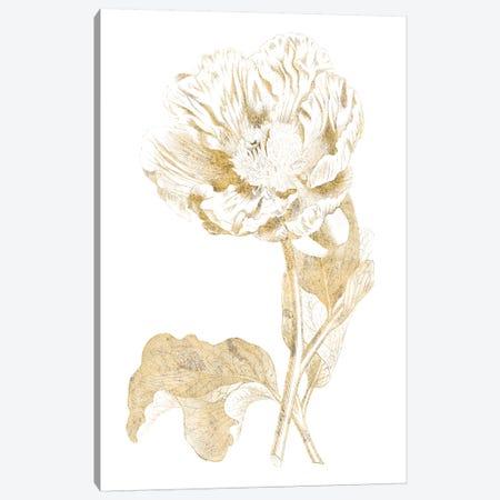 Gilded Botanical VII Canvas Print #WAC7068} by Wild Apple Portfolio Canvas Art Print