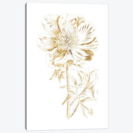 Gilded Botanical VIII Canvas Print #WAC7069} by Wild Apple Portfolio Canvas Art Print