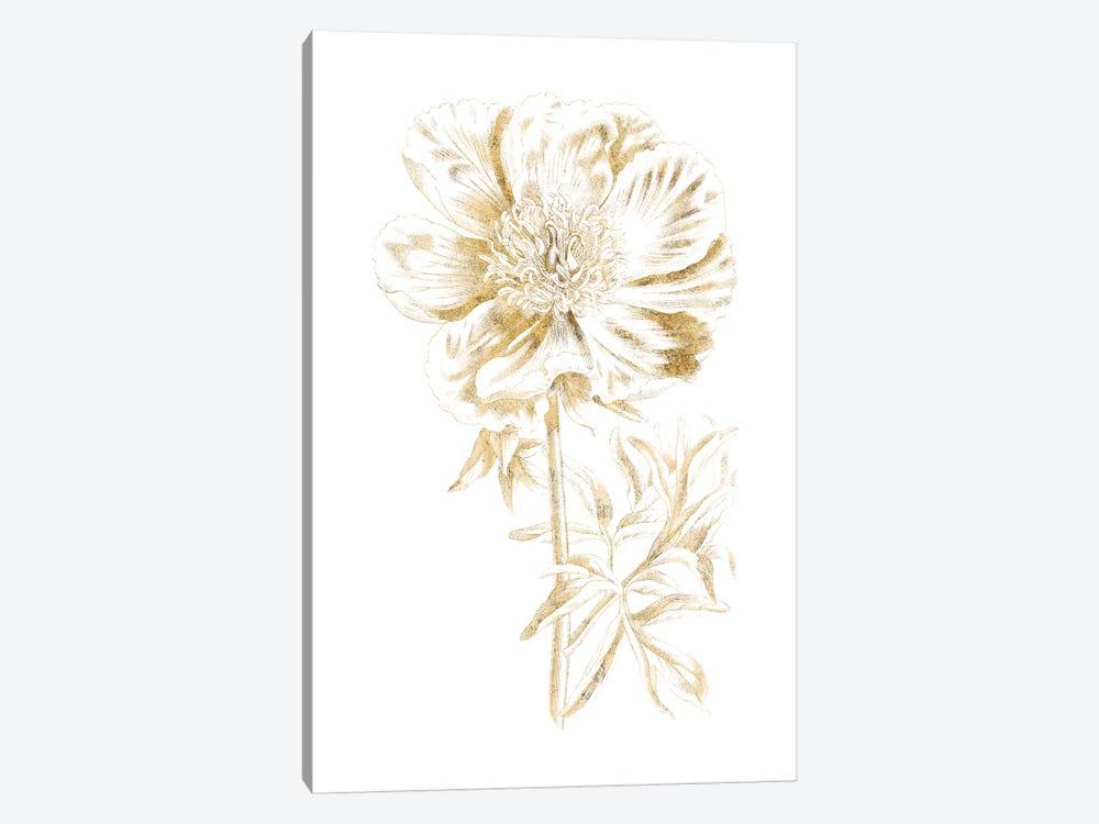 Gilded Botanical VIII by Wild Apple Portfolio 1-piece Canvas Print