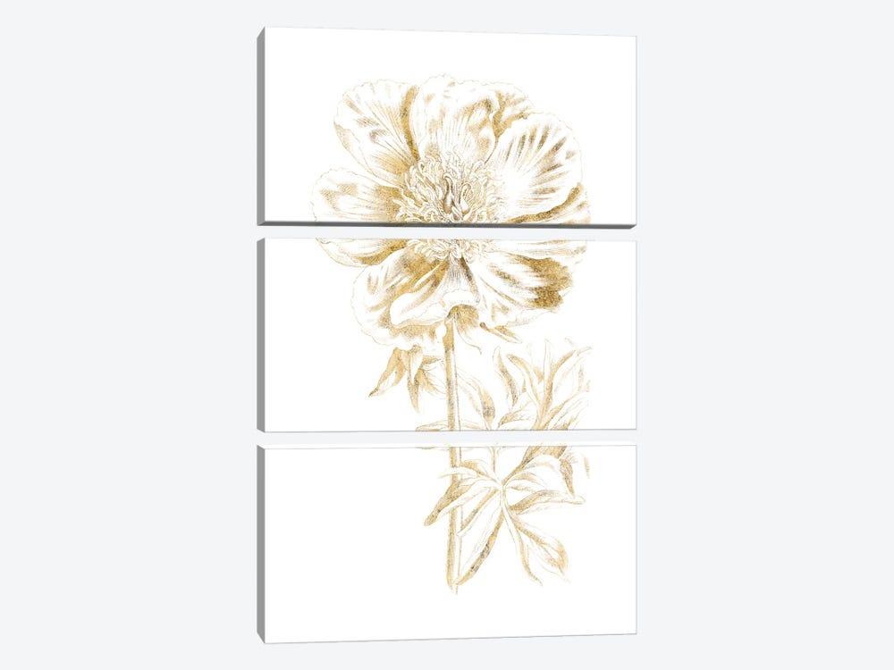 Gilded Botanical VIII by Wild Apple Portfolio 3-piece Canvas Art Print