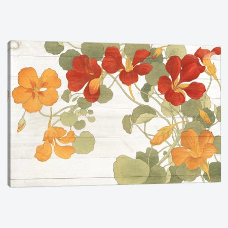 Summer Nasturtiums Cottage Canvas Print #WAC7074} by Wild Apple Portfolio Canvas Print