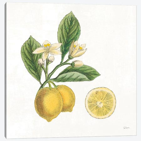 Classic Citrus I Canvas Print #WAC7078} by Sue Schlabach Canvas Artwork