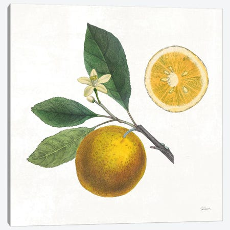 Classic Citrus II Canvas Print #WAC7079} by Sue Schlabach Canvas Wall Art