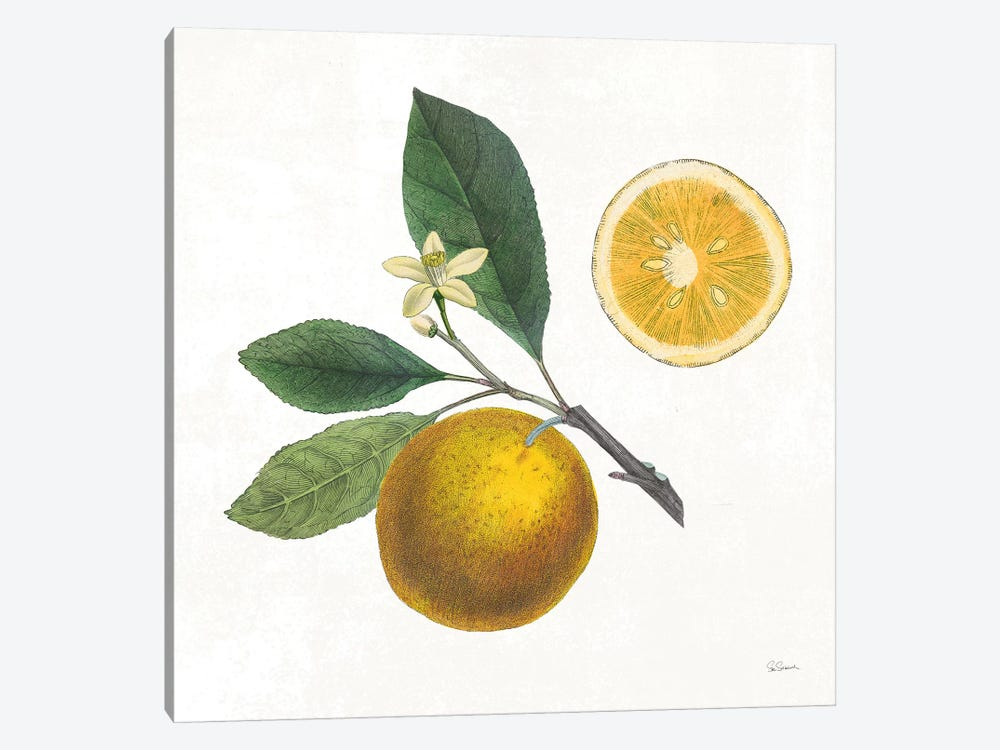 Classic Citrus II by Sue Schlabach 1-piece Canvas Art